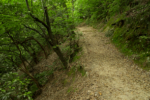 岐阜城 搦手道 瞑想の小径 登り口付近の写真素材 [FYI04079462]