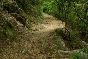 岐阜城 搦手道 瞑想の小径 登り口付近の写真素材 [FYI04079472]