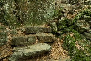 岐阜城 搦手道 瞑想の小径  天守台下の石段 の写真素材 [FYI04079473]