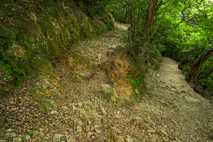 岐阜城 搦手道 瞑想の小径 登り口付近の写真素材 [FYI04079477]