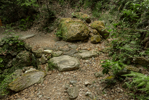 岐阜城 搦手道 瞑想の小径 中間点付近の写真素材 [FYI04079482]