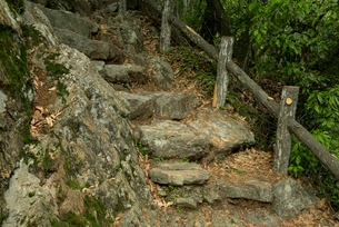 岐阜城 搦手道 瞑想の小径  天守台下の石段 の写真素材 [FYI04079486]