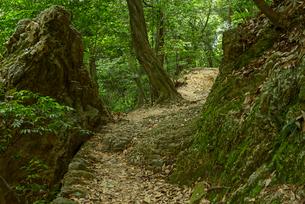 岐阜城 搦手道 瞑想の小径 中間点付近の写真素材 [FYI04079487]