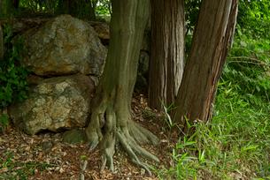 小倉山城 二之丸 西南櫓の石垣 西南隅櫓の写真素材 [FYI04079512]