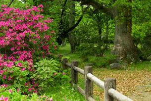 松坂城 きたい丸下段の腰曲輪 ツツジと巨木の写真素材 [FYI04079546]