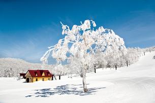 蔵王温泉スキー場パラダイスゲレンデの写真素材 [FYI04079646]