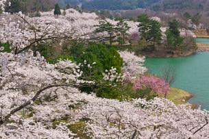 大野ダム公園の写真素材 [FYI04079851]
