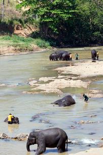 象の水浴びの写真素材 [FYI04079881]