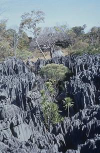 ツィンギ・デ・ベマラ厳正自然保護区の写真素材 [FYI04080774]