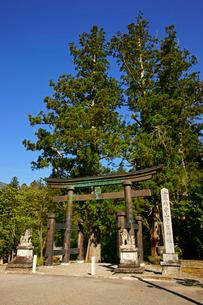鳥居と大杉 白山中居神社の写真素材 [FYI04080917]