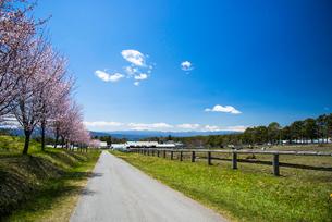 桜咲く八ヶ岳農場の写真素材 [FYI04081040]
