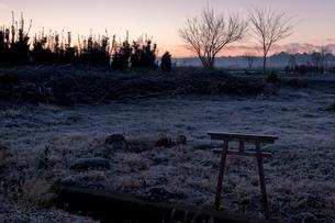 夜明けの霜の草地の小さな鳥居 見沼田んぼの写真素材 [FYI04081092]