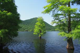 新緑のイムタ池と水鳥の写真素材 [FYI04081124]