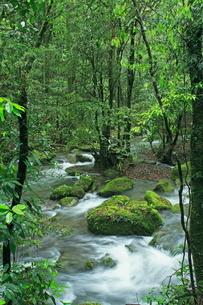 新緑の悠久の森の写真素材 [FYI04081133]