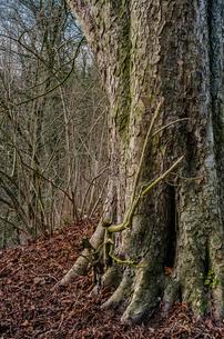 ネアンデルタールの自然の写真素材 [FYI04081291]