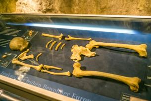 ネアンデルタール人の人骨の写真素材 [FYI04081295]