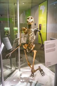 ネアンデルタール人の人骨の写真素材 [FYI04081297]