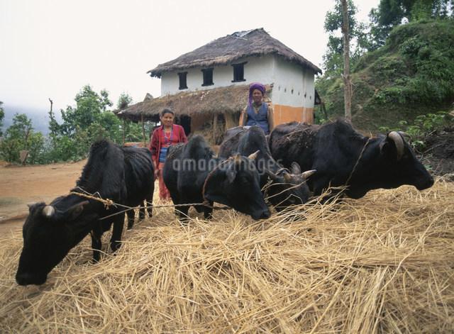 農作業の写真素材 [FYI04081356]