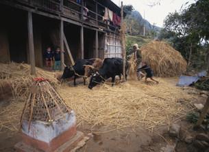 農作業の写真素材 [FYI04081364]