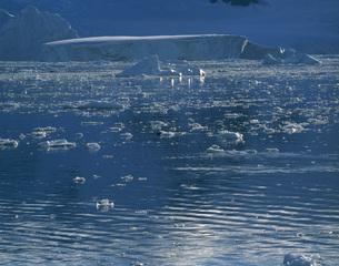 浮いている氷の写真素材 [FYI04081924]