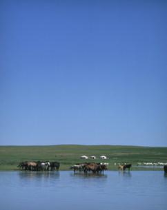 水辺の馬と遠くにみえるゲルの写真素材 [FYI04081932]
