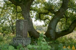 旧谷中村共同墓地の写真素材 [FYI04081945]