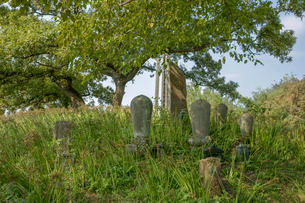 旧谷中村共同墓地の写真素材 [FYI04081946]