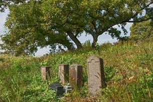 旧谷中村共同墓地の写真素材 [FYI04081953]