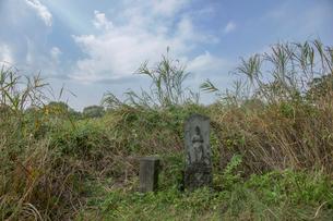 旧谷中村共同墓地の写真素材 [FYI04081958]