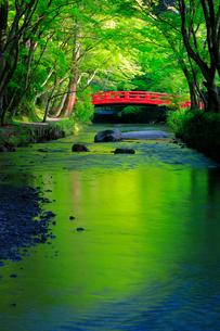 新緑の小国神社 太鼓橋の写真素材 [FYI04082184]