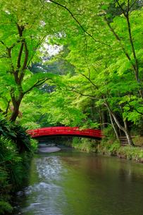 新緑の小国神社 太鼓橋の写真素材 [FYI04082193]