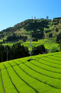 茶畑と粟ヶ岳の茶文字の写真素材 [FYI04082253]