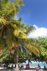 マーレ島,人工砂浜に集う木々の写真素材 [FYI04082731]