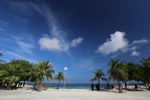 マーレ島,椰子の木と空,の写真素材 [FYI04082733]