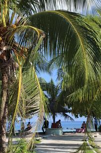 マーレ島,人工砂浜に集う木々,の写真素材 [FYI04082740]