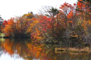 八方湖の紅葉の写真素材 [FYI04082988]
