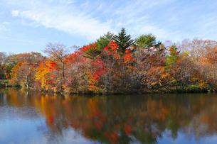 八方湖の紅葉の写真素材 [FYI04082989]