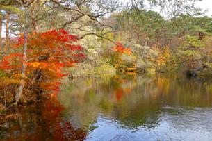五色沼湖沼群の写真素材 [FYI04082995]