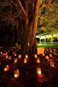 熊野神社長床のライトアップの写真素材 [FYI04083036]