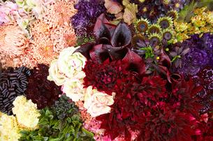 木の箱に飾られた花々の写真素材 [FYI04083116]