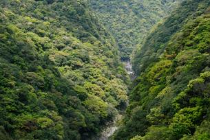 照葉樹林に覆われた安房川下流の渓谷の写真素材 [FYI04083249]