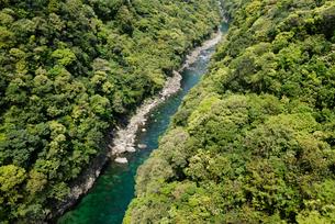 安房川の照葉樹林 安房川下流の渓谷は原生状態の照葉樹林に覆わの写真素材 [FYI04083262]