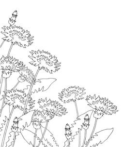 タンポポ線画のイラスト素材 [FYI04083477]