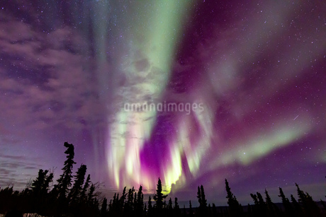 アラスカ フェアバンクスのオーロラの写真素材 [FYI04083576]