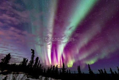 アラスカ フェアバンクスのオーロラの写真素材 [FYI04083580]
