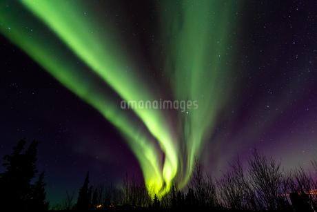 アラスカ フェアバンクスの写真素材 [FYI04083581]