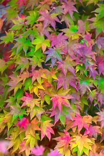 秋の彩りの写真素材 [FYI04083719]