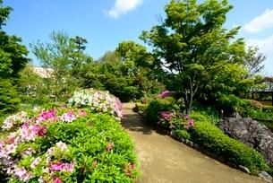 堺,新緑の大仙公園,日本庭園散策の写真素材 [FYI04083910]
