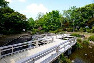 堺,新緑の大仙公園,日本庭園春燕橋の写真素材 [FYI04083935]