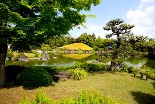 堺,新緑の大仙公園,日本庭園杜若池の写真素材 [FYI04083959]